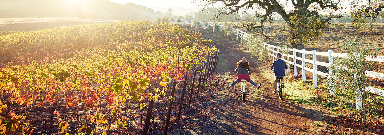 Couple Bike Riding Through Vineyards