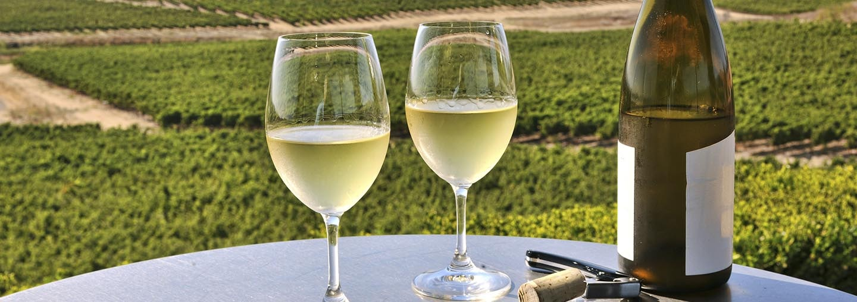 Wine in Napa Valley Vineyards