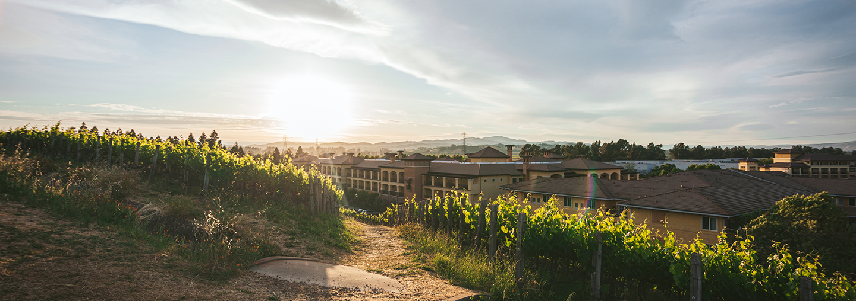 Vineyards at Vista Collina Resort