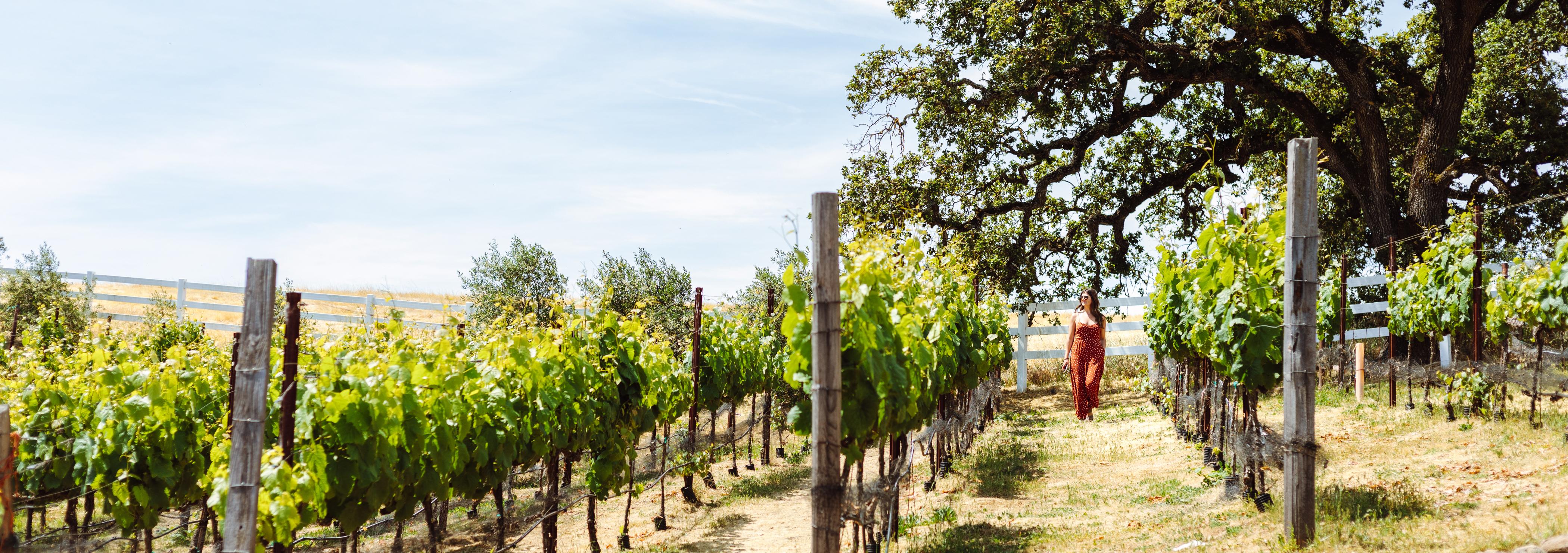 Walking in Vineyard