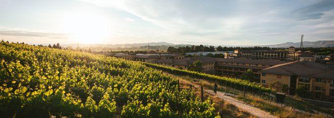 Mobile: Vineyard