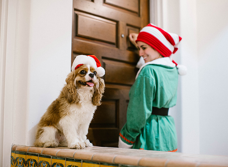 Elf Cookie Delivery